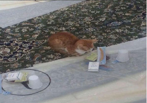 عکس گربه روزه دار منتظر افطار