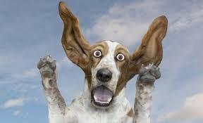 سگی که ساعت اپل به دست می بندد + عکس