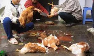 آنفلانزای مرغی به ایران رسید