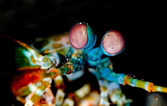 تصاویر ترسناک ترین و زیباترین هیولاهای دریا