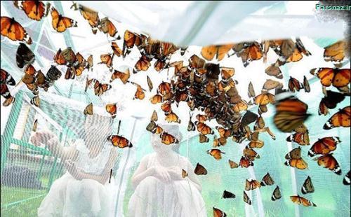 تصاویر فستیوال پروانه ها در چین