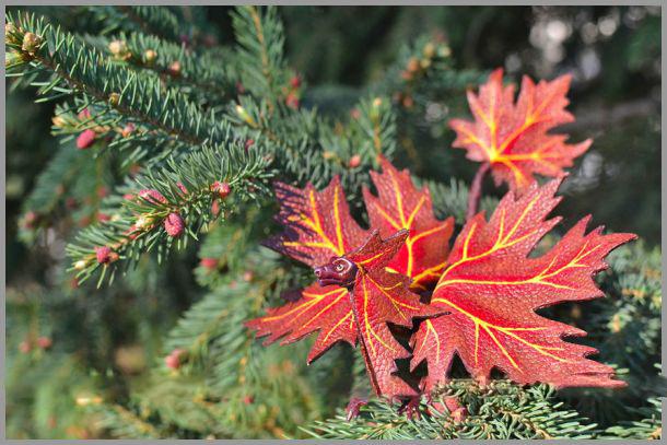 اژدهای برگی از جنس طبیعت و برگ های درختان