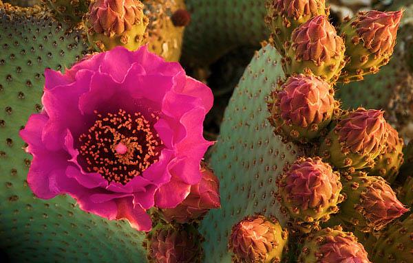 تصاویر زیبا از گل هایی که  تا به حال ندیدید