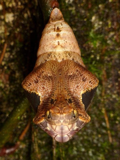 آیا می توانید حدس بزنید این چه موجودیست؟