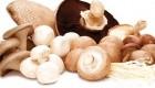 چگونه قارچ انسان را لاغر میکند