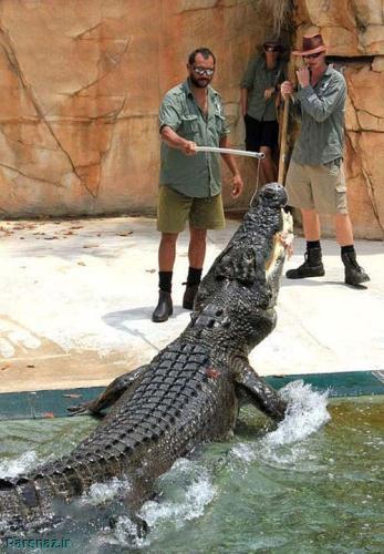 وحشت ناک ترین سرگرمی جهان رابطه انسان با تمساح
