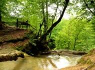 مدفون شدن 150 هکتار از جنگلهای سوادکوه زیر آب
