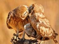 زیباترین بوسه های جهان