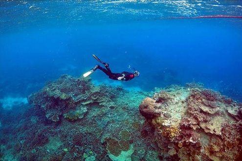 زیباترین سواحل مرجانی در حال نابودی