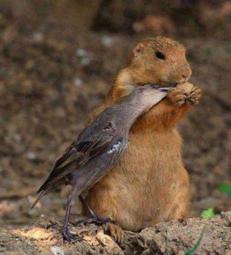 تصاویر طنز بیا بشین اینجا عشقم !