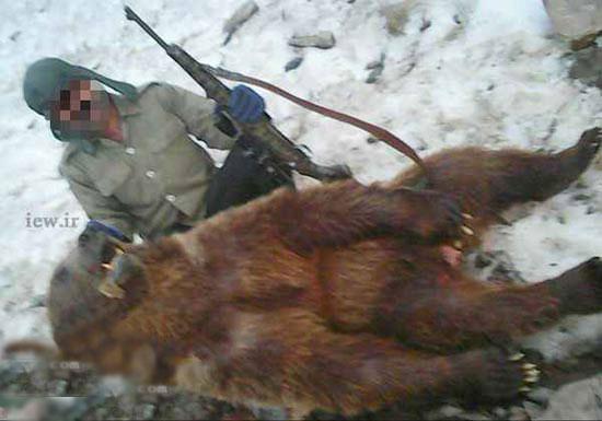 جنجال فاجعه شکار خرس قهوه ای کمیاب در کلاردشت