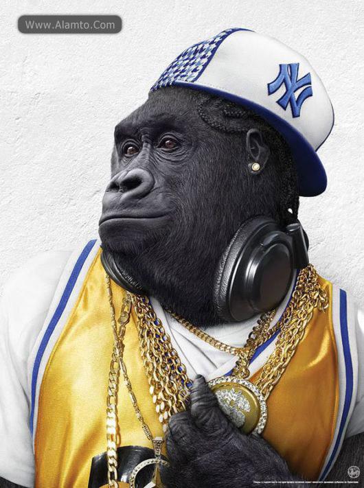 تصاویر جالب از فشن میمونی