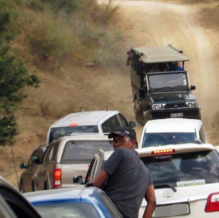 تصاویر وحشتناک از حمله پلنگ به تور گردشگری