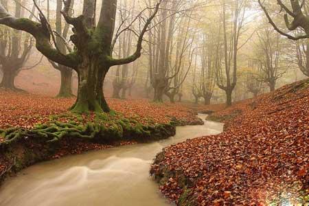 تصاویر رویایی از پارک 20 هزار هکتاری در اسپانیا