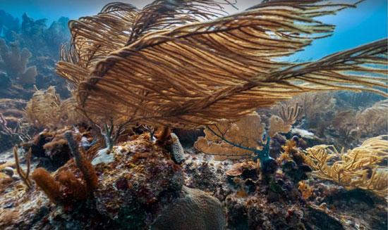 تصاویر زیبای اعماق اقیانوس از دید گوگل
