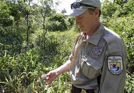 دلیل ترک آشیانه ناگهانی پرندگان سواحل فلوریدا