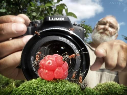 تصاویر فانتزی بسيار زيبا از دنیای مورچه ها
