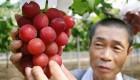 خوشه انگور 27 میلیون تومانی رکورددار شد