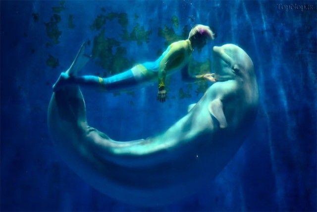 این نهنگ فکر میکند دلفین است