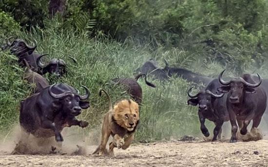 برای اینکه جان سالم به در ببرید از این 10 حیوان دوری کنید