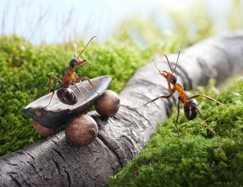 تصاویر فانتزی از دنیای مورچه ها
