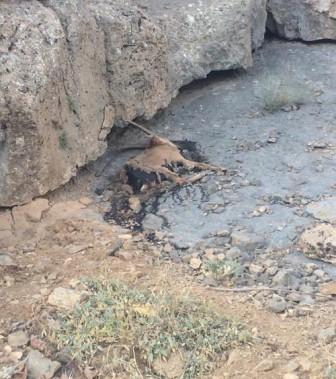 بیداد تلفات طاعون در استان مرکزی