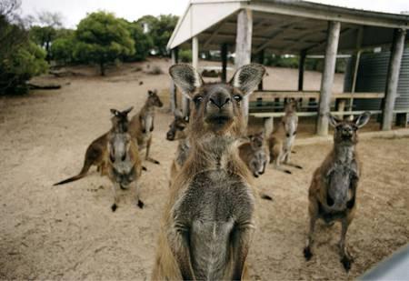 تصاویر عجیب بامزه و خنده دار از حیوانات
