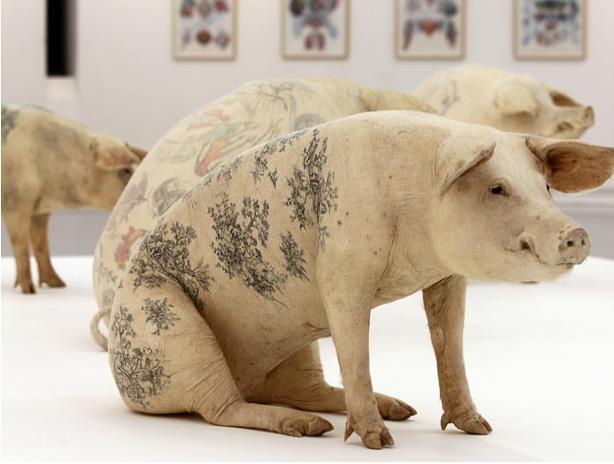 سرگرمی عجیب و غریب خالکوبی خوک های زنده