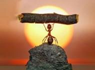 دانستنی های مهم درباره قدرت بویایی مورچه
