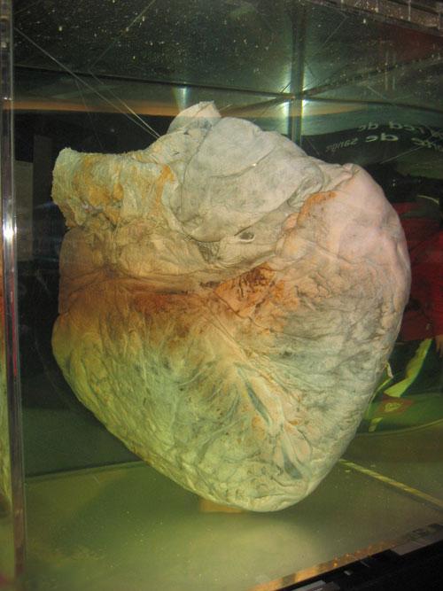 قلب بزرگ ترین موجود روی زمین