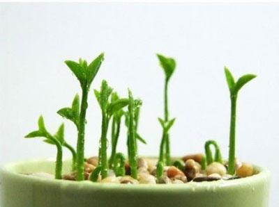 طرز کاشت پرورش لیمو ترش خانگی