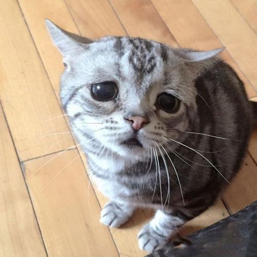 مظلوم ترین گربه دنیا به چهره ای نگران
