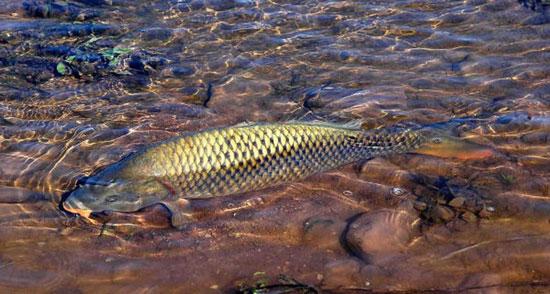 شکار ماهی میلیون دلاری