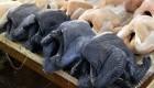 ورود مرغ و جوجه سیاه پوست به بازار طیور