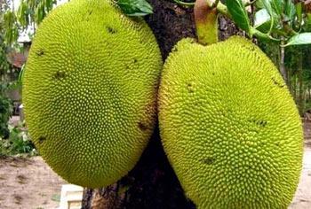 16 میوه عجیب که تا به حال ندیدید