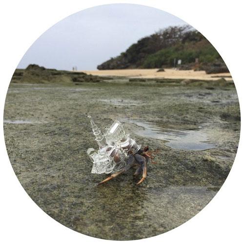 خانه های زیبای مینیاتوری بر دوش خرچنگ ها
