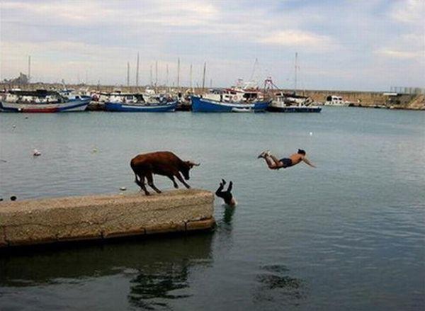 تصاویر طنز از شکار لحظه ها