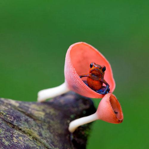 دنیای زیبا و جالب قورباغه ها