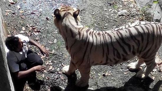 عجیب ترین مرگ های انسان توسط حیوانات