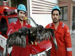 عقابی که با هجوم به استخر یک خانه ویلایی در مشهد موجب وحشت ساکنان شد