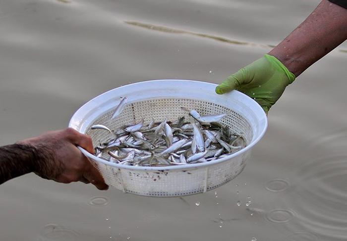 مشارکت خود جوش مردم اصفهان در نجات ماهی های زاینده رود