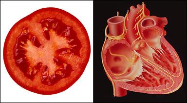 میوه هایی که از لحاظ ظاهری شباهت بسیار زیادی به اندام بدن انسان دارند