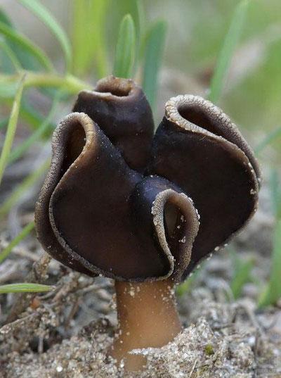 زیباترین قارچ های دنیا