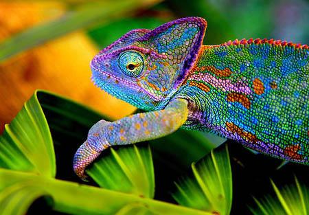 دانستنی های بسیار جالبی از دنیای حیوانات