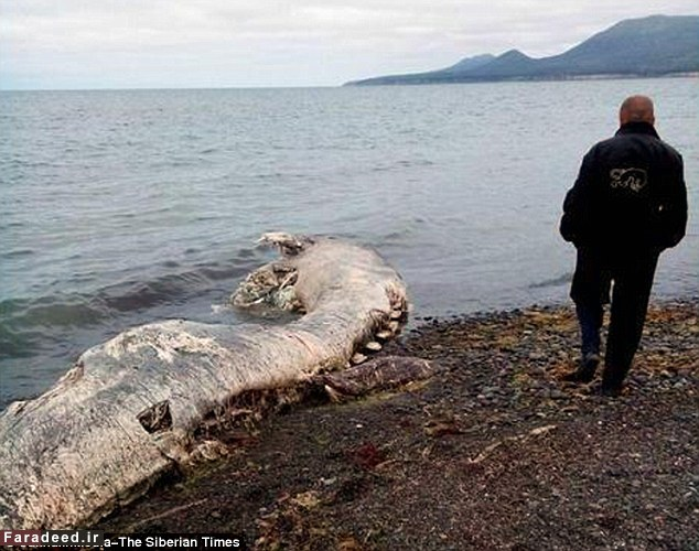 تصاویر کشف موجودی عجیب و ناشناخته در سواحل روسیه