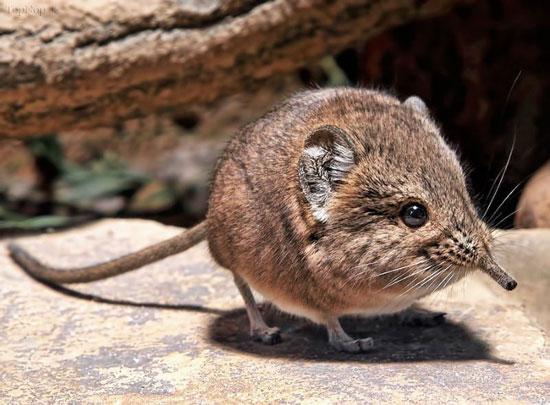 تصاویر جانور عجیب و جدید در کویر های نامیبیا
