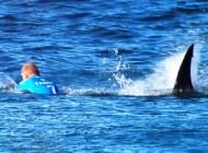تصاویر دلهره آور فرار موج سوار از دست کوسه