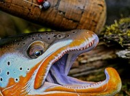 نتیجه عشق به هنر طبیعت و ماهیگیری