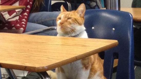 تصاویر گربهای که کارت دانشجویی گرفت