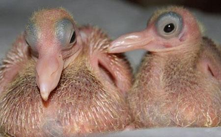 تصاویر جالب از نوزاد حیوانات